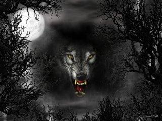 گرگ ها را به زندگی خود دعوت کنید و با آن ها برقصید !